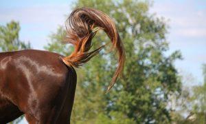 At Kuyruğunu Neden Sağa Sola Sallar?