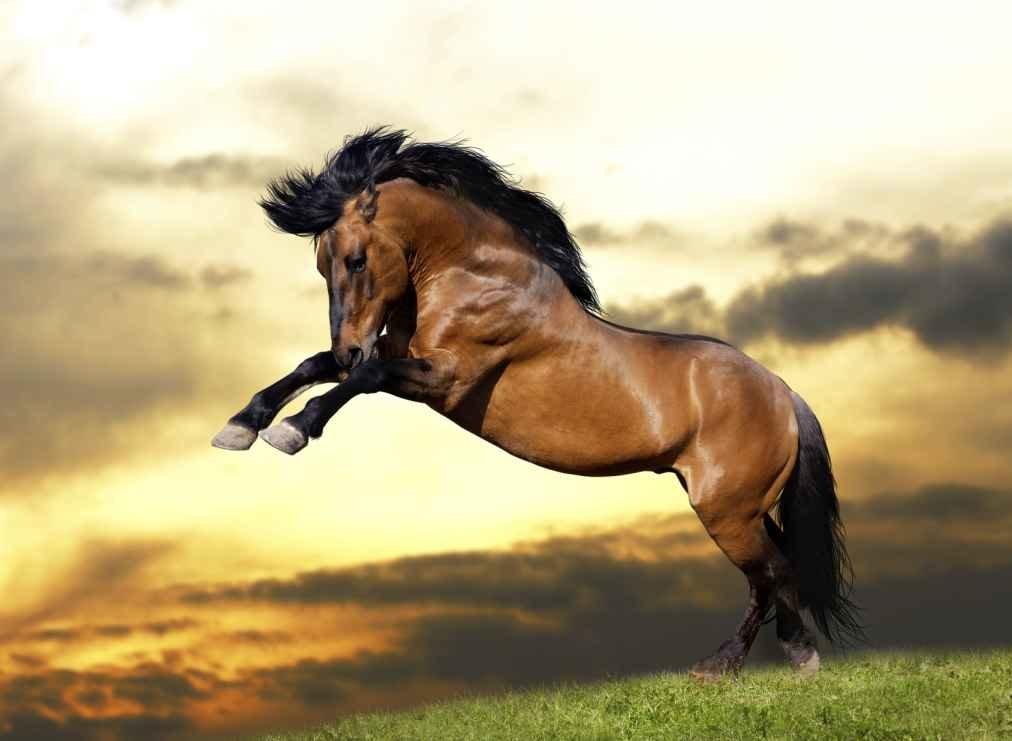 Atların Korkması