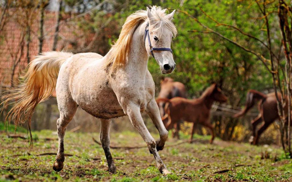 At Kilo Alımı