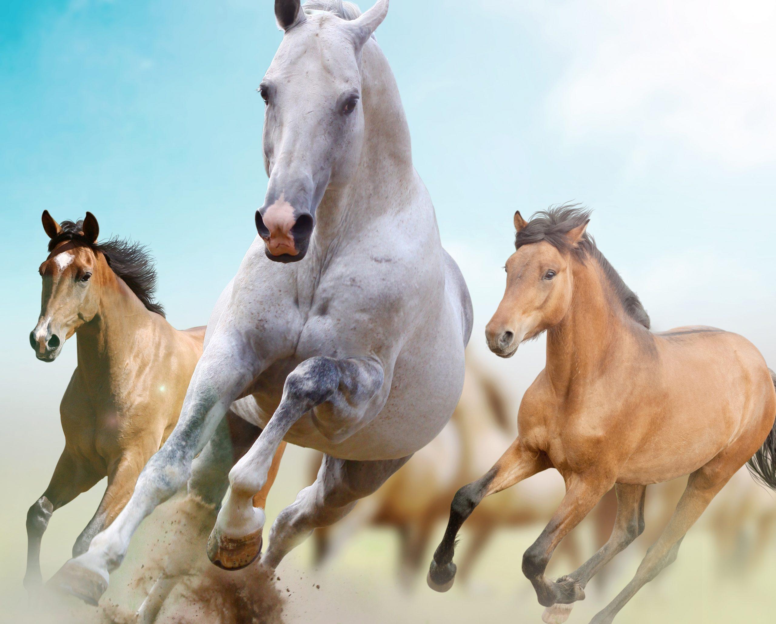 atlar-ayaklarini-neden-yere-vurur