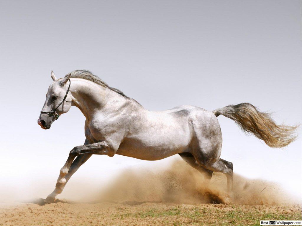 Atlar İçin Kış Bakımı