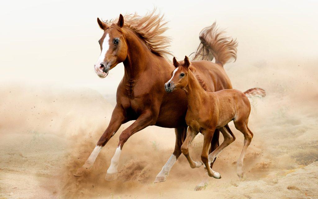 Atlar İnsanların Duygularını Hisseder Mi?