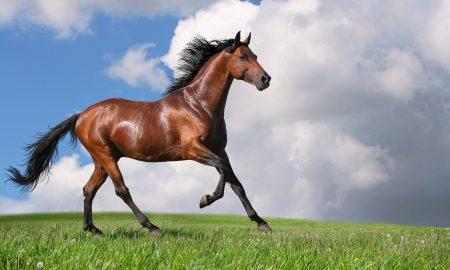 Atlar Neden Ayaklarını Yere Vurur?