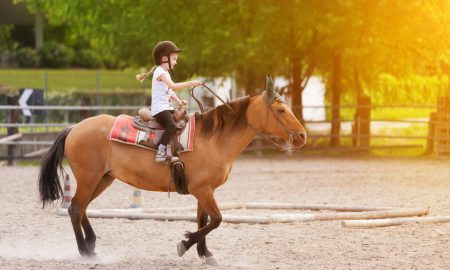 Atlara Kaç Yaşından İtibaren Binilmeli?