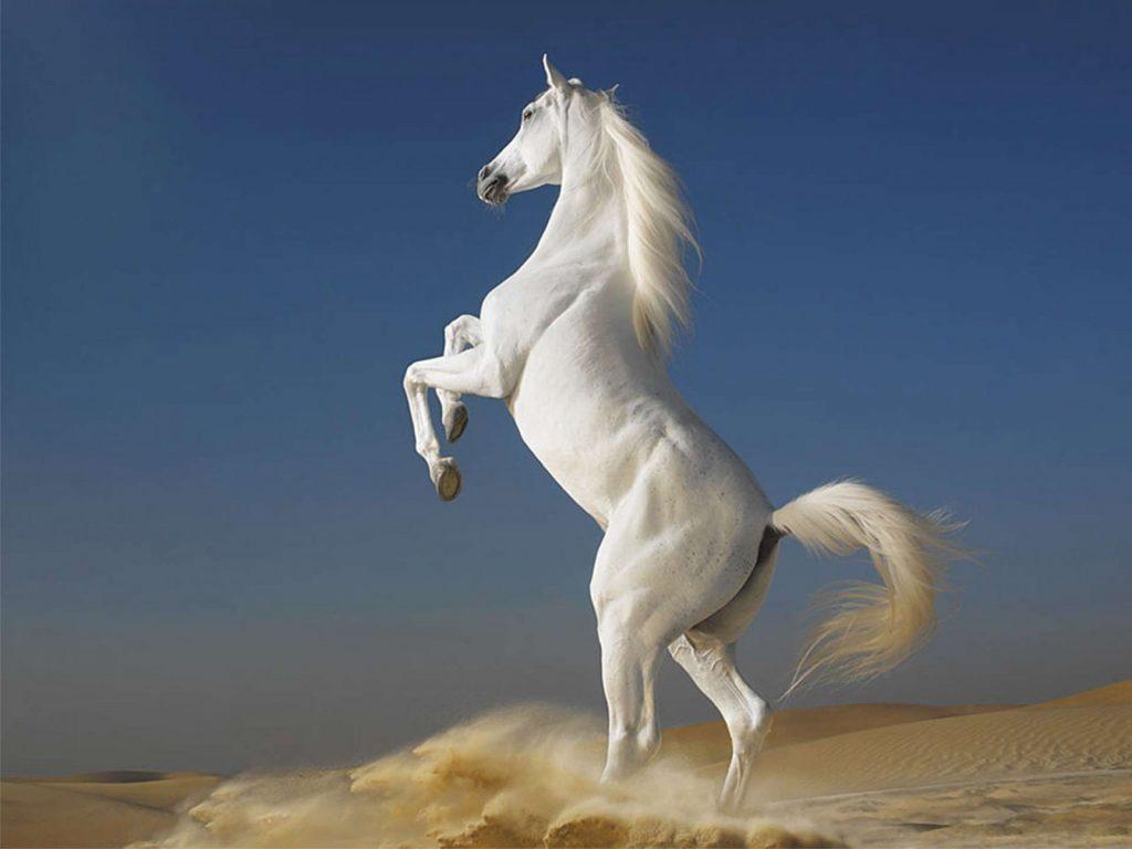 Atların Tırnakları Kırılması