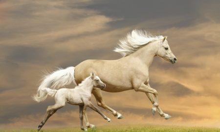 Atların Tırnakları Neden Kırılır?