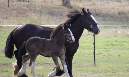 At Irkı - Cinsi Nasıl Seçilir?