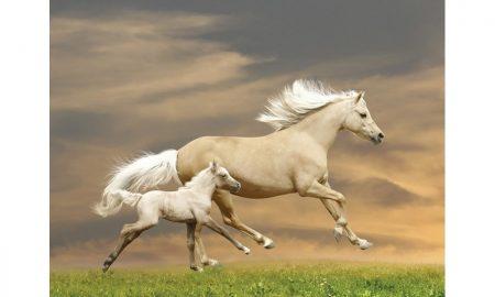 At Onu Yönlendirdiğimi Anlar Mı? Bana İtaat Eder Mi?