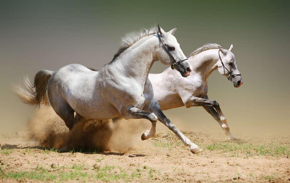atlar-neden-uyumaz