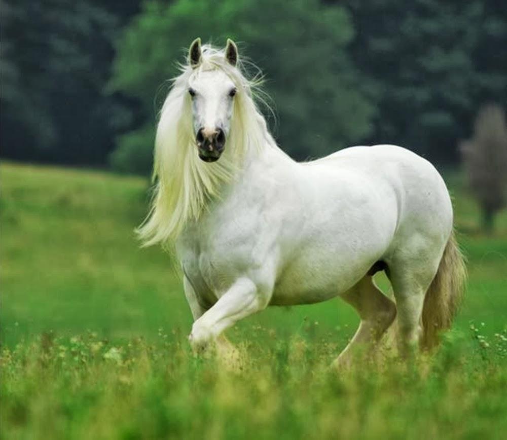 Atımın Burnu Akıyor Nedeni Nedir?
