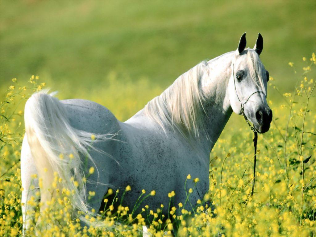 Atlar İçin Ortam Sıcaklığının Önemi