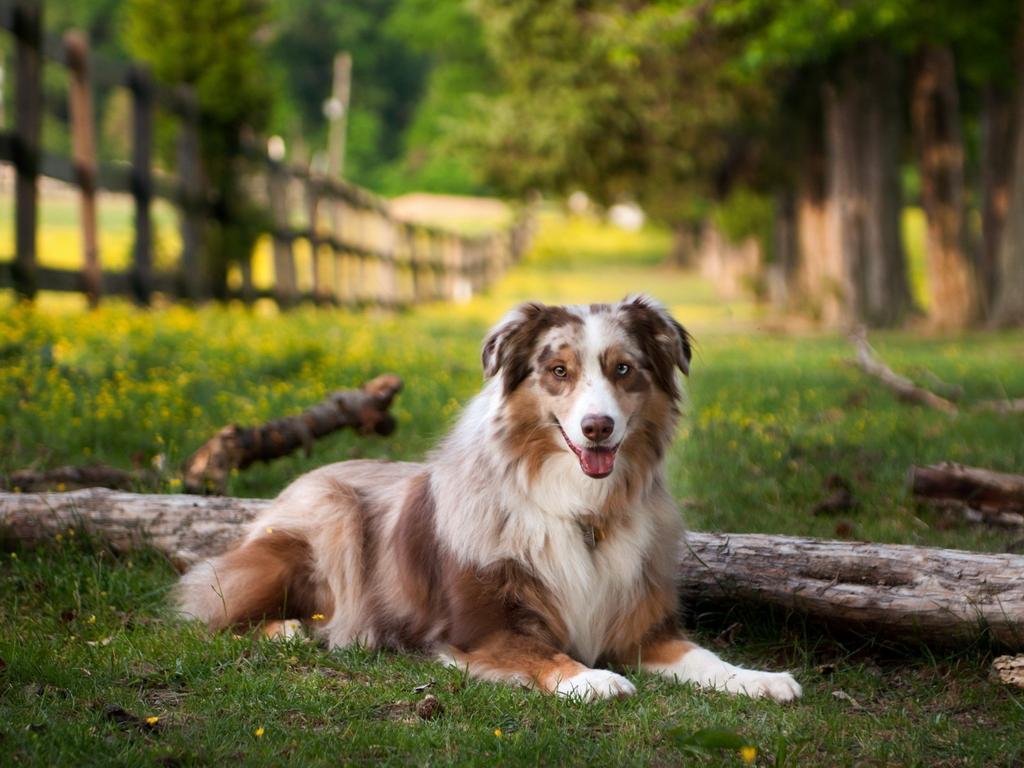Köpeklerde Burun Akıntısı Neden Olur, Tedavi Yolları Nelerdir?