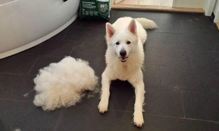 Köpeklerde Tüy Ve Deri Bakımı Nasıl Yapılır?