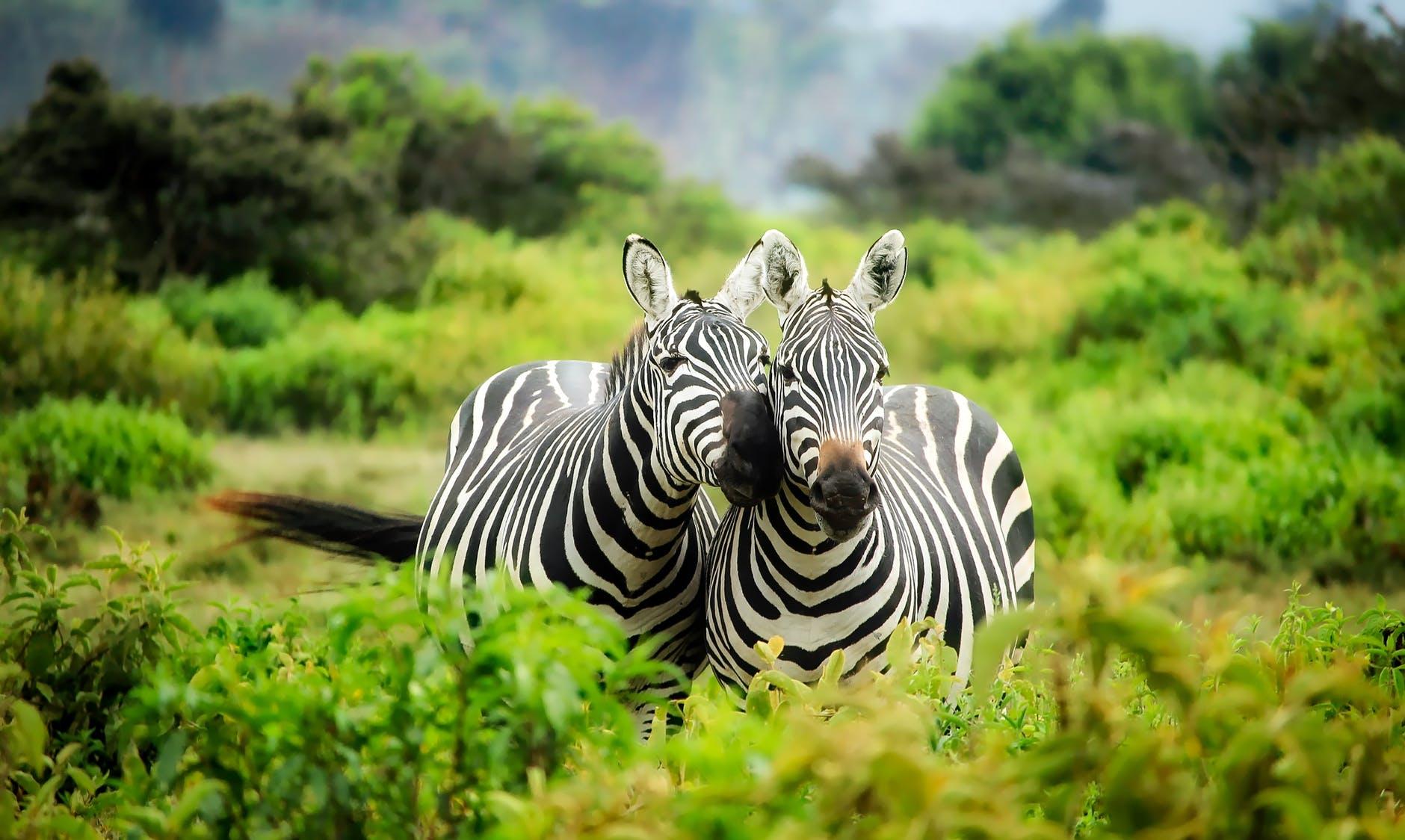 İzmir'de Hayvanat Bahçesi Kaç Tane Vardır?