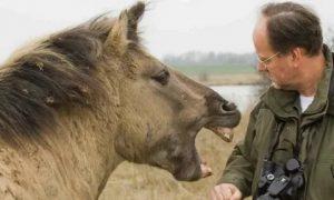 At Neden Isırır?