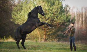 Atlar Çiftleşmeye Hangi Ayda Hazır Olur?