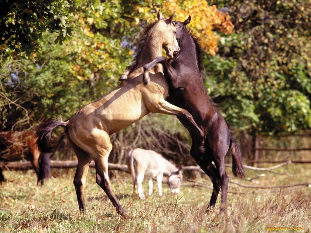 Atların Mayalarının Yumuşama Nedeni Nedir?