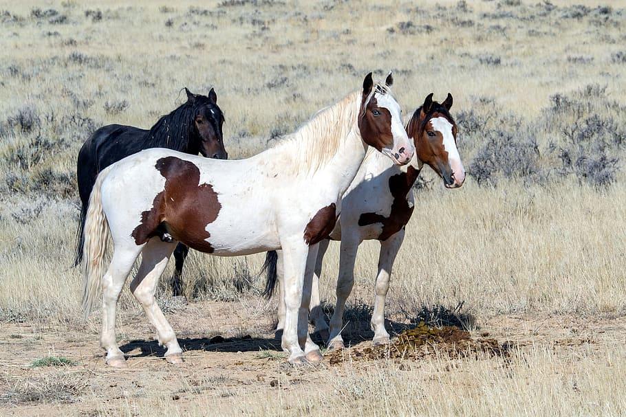 atlarin-mayalarinin-yumusamasi