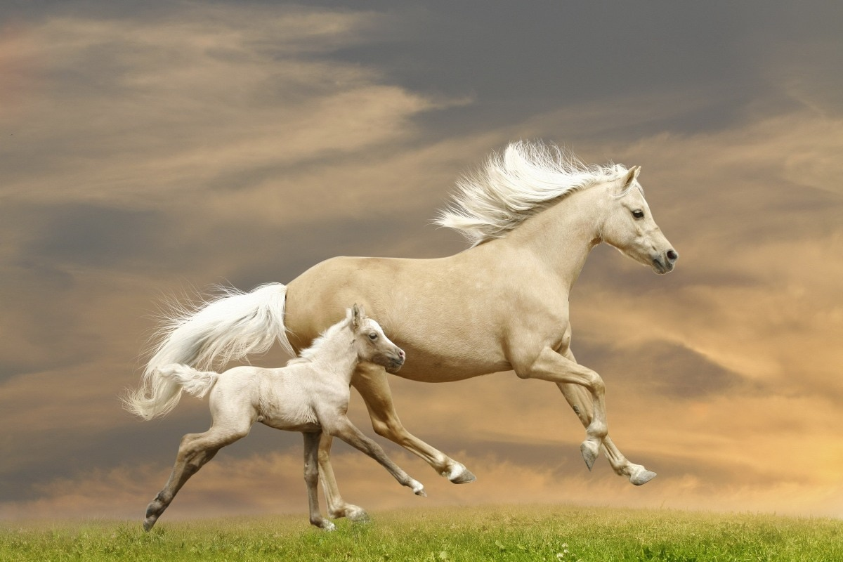 atlarin-tirnaklari-neden-kirilir