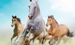 At Binmeyi Ne Kadar Sürede Öğrenirim?
