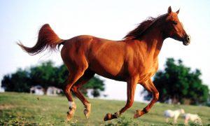 At Alırken Nelere Dikkat Etmeliyiz?