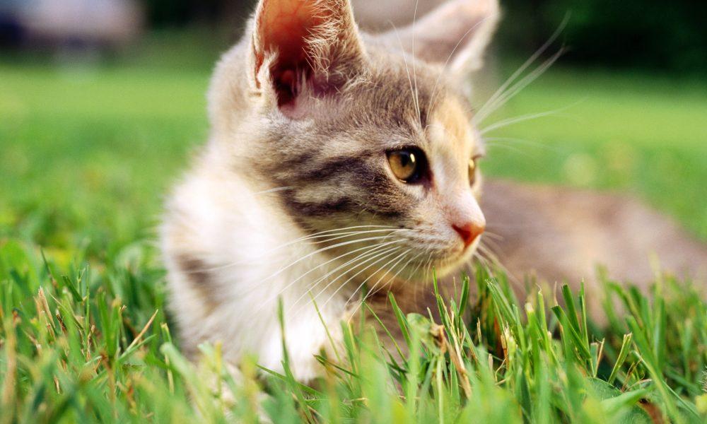 Kediniz Kustuğunda Ne Yapmalısınız?
